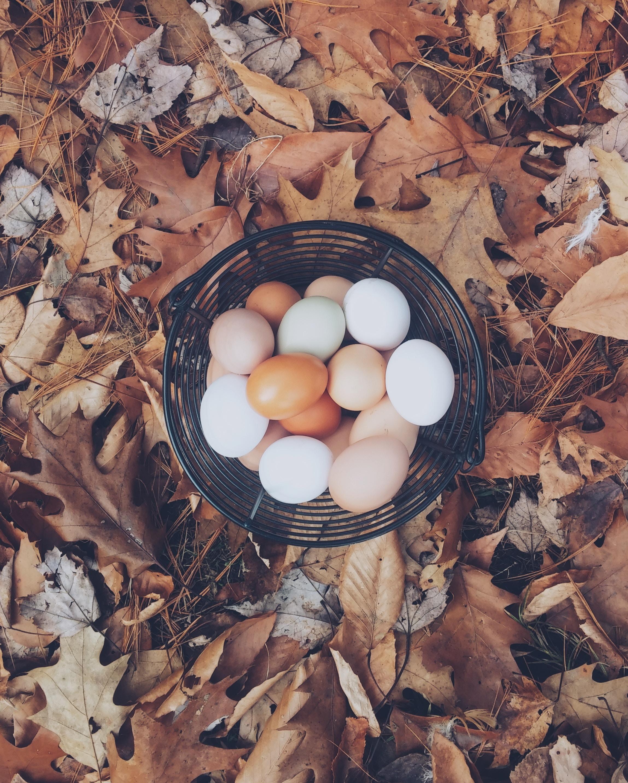 eggs, basket, stocks